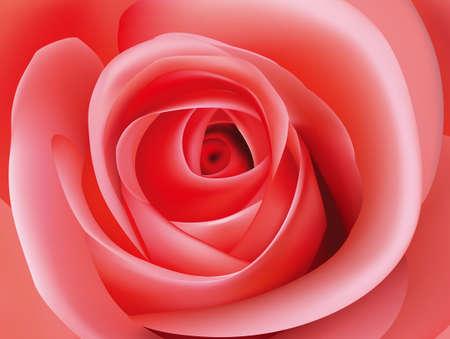Macro image of a pink rose.
