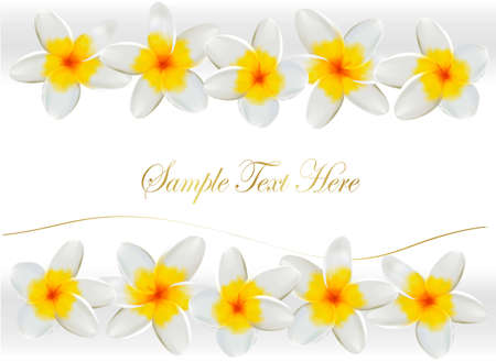 Background with frangipani flowers. Vector illustration. Vector