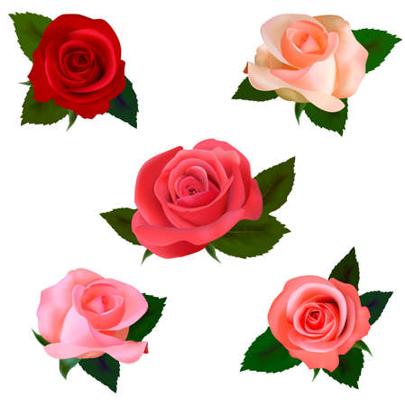 single red rose: Big set of a beautiful colored roses. Vector illustration. Illustration