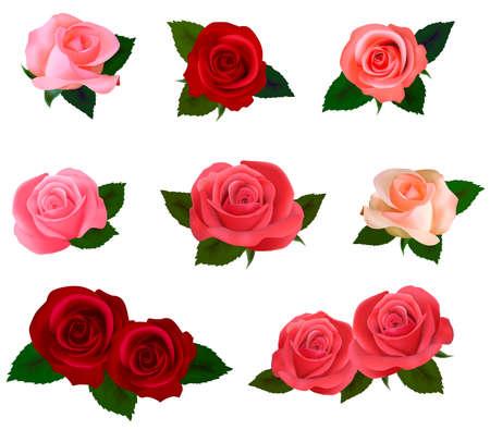 natura morta con fiori: Set di un grande bellissime rose colorate. Illustrazione vettoriale.
