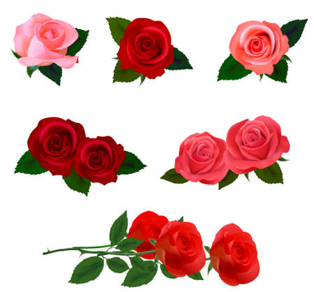 rosebud: Big set of a beautiful colored roses. Vector illustration. Illustration