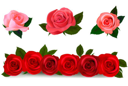 arrangement: Big set of a beautiful colored roses. Vector illustration. Illustration