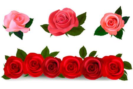 Conjunto grande de un hermoso color rosas. Ilustración vectorial.