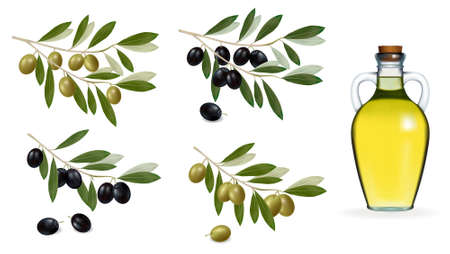 Vector illustration. Big set with green and black olives and bottle of olive oil. .