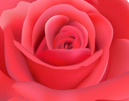 funeral: Macro image of dark pink rose with water droplet. Vector illustration.