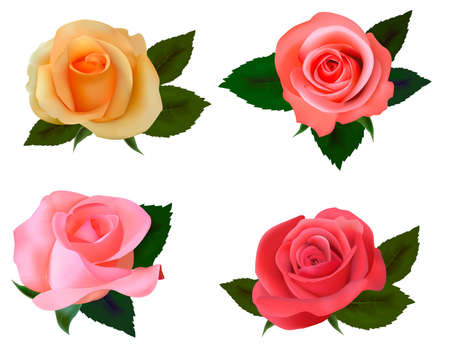 Group of a beauty roses on a white background. Vector. Stock Vector - 10017325