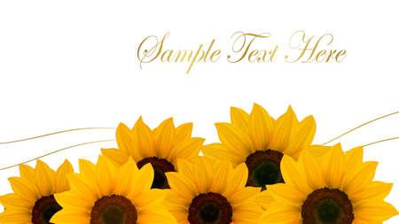 stamen: Beautiful yellow Sunflower background. Vector. Illustration