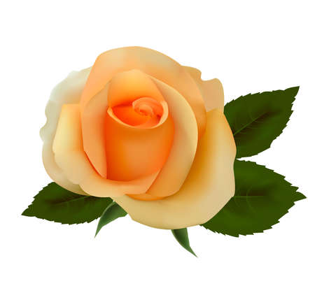 natura morta con fiori: Bella rosa tea. Illustrazione vettoriale