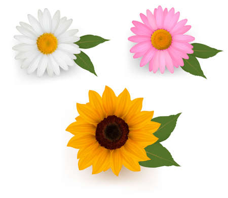 daisyflower: Big set of a beautiful colorful flowers. Vector illustration