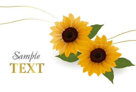 Beautiful yellow Sunflower background. Vector.