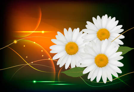 yellow daisy: Background with beautiful white flowers. Vector illustration. Illustration