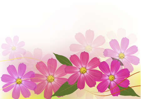 daisy pink: Background with beautiful color flowers. Vector illustration.