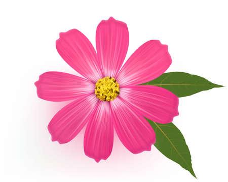 Belle fleur marguerite avec des feuilles. Vecteur. Vecteurs
