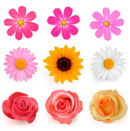 margerite: Big set of beautiful colorful flowers. Vector illustration
