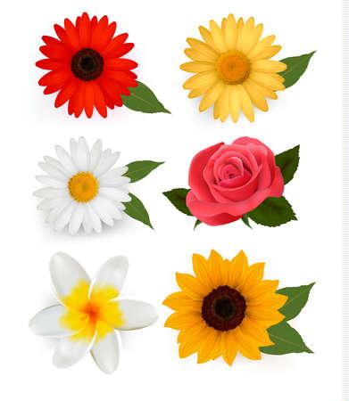 Gran conjunto de bellas flores coloridas.