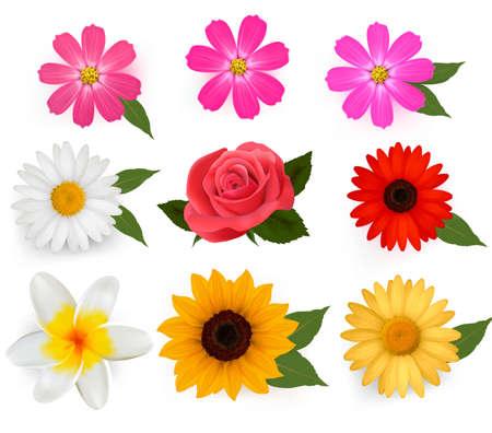 Gran colección de bellas flores coloridas.  Ilustración de vector