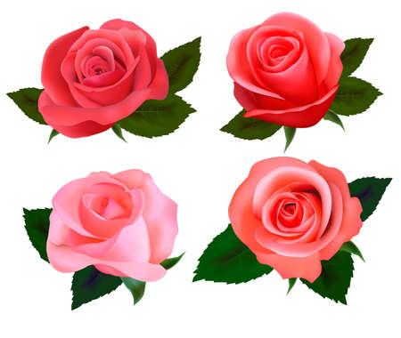 rose frame: Set of a beautiful roses. Vector illustration. Illustration