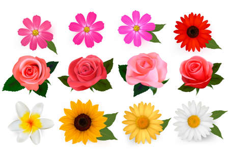 margerite:  Big set of beautiful colorful flowers. Vector illustration.