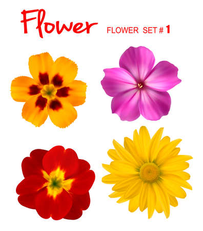 chamomile flower: Big set of beautiful colorful flowers. Design flower set 1. Vector illustration.