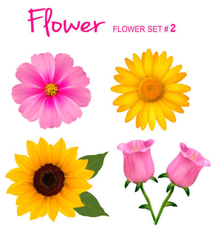 sunflower isolated: Big set of beautiful colorful flowers. Design flower set 2. Vector illustration.