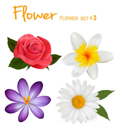 gerber: Big set of beautiful colorful flowers. Design flower set 3. Vector illustration.