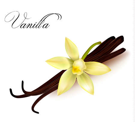 flowers close up: Vanilla pods and flower. Vector illustration.
