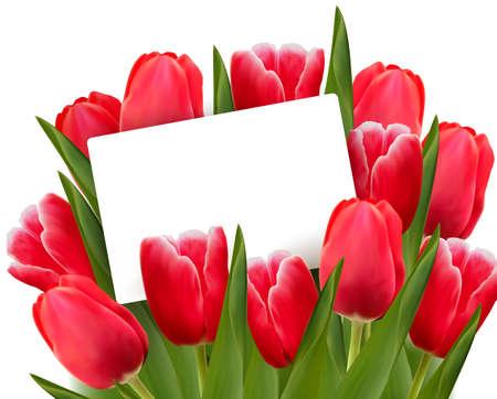 Tulipanes rojos y blanco de la tarjeta