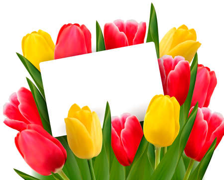 Red and yellow tulips and blank of card. Vector illustration. 向量圖像