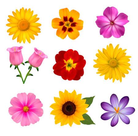 gerber: Big set of beautiful colorful flowers.