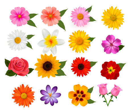 Big set of beautiful colorful flowers Vector