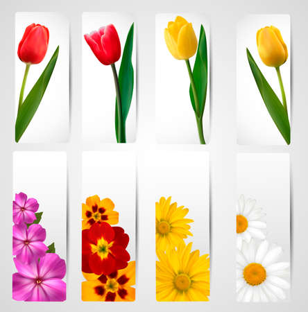 margerite: Set of banners with different colorful flower  Vector illustration