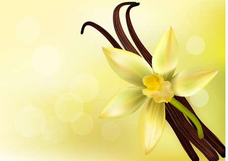 flor de vainilla: Vainas de vainilla y flores. Vector ilustración.