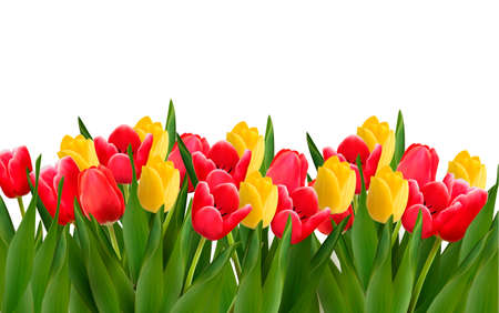 tulips: Holiday background with colorful flowers illustration.