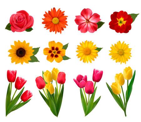 margerite: Set of beautiful flowers.  illustration