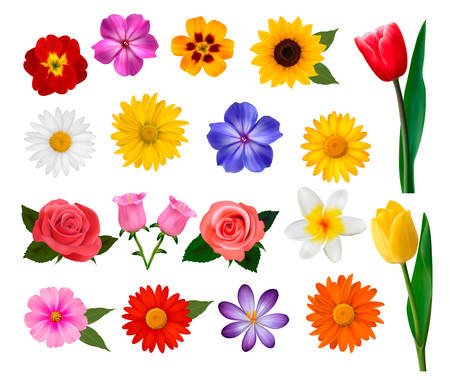 Big collection of colorful flowers. Vector illustration. Çizim