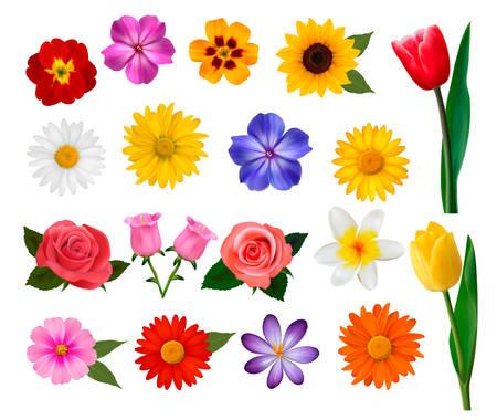 conjunto: Gran colección de coloridas flores. Ilustración del vector.