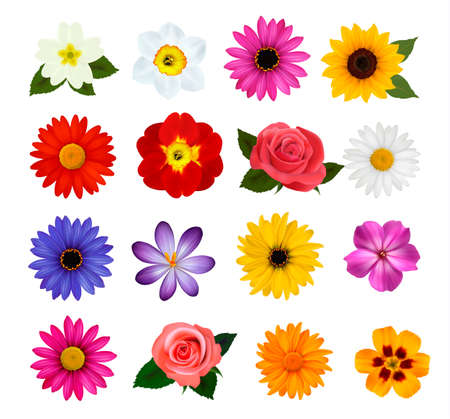Big collection of colorful flowers.  Illustration