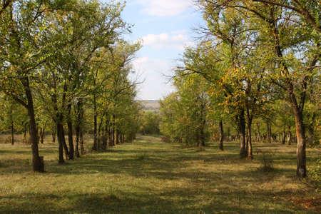 Natura. Paesaggio, parco autunno in una giornata di sole brillante