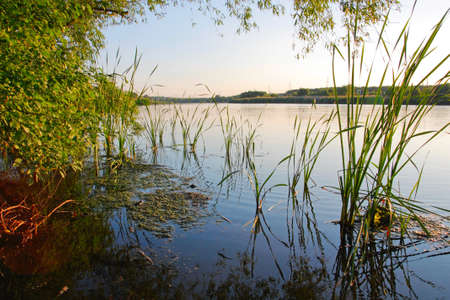 duckweed: Landscape, reeds, duckweed, a tree on the river bank Stock Photo