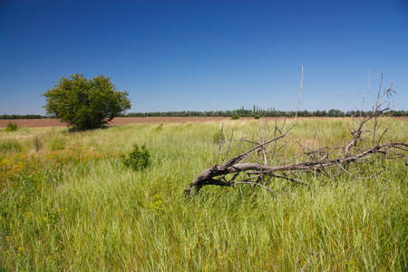 arboles secos: paisaje rural, �rboles muertos en la estepa