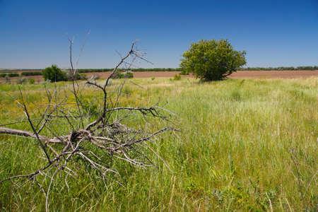 arboles secos: paisaje rural, árboles muertos en la estepa