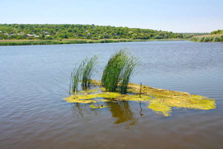 rushes: Landscape, duckweed and rushes on a river Stock Photo