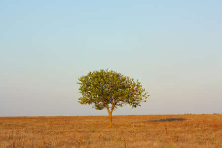 lonely tree: Landscape, lonely tree in the steppe against the sky