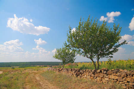 Rural landscape, a fence made of natural stone, trees against the sky with clouds in summer