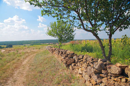 blu sky: Rural landscape, a fence made of natural stone, trees against the blu sky with clouds in summer