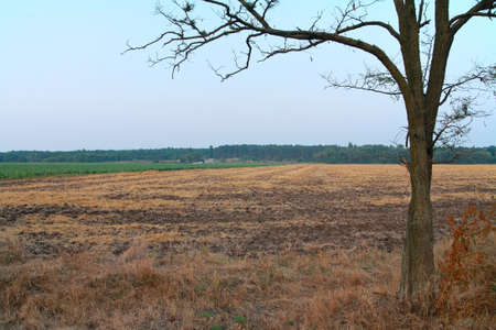 Rural landscape, in the foreground of a withered tree, plowed field, forest against the sky