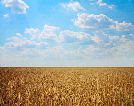 Landscapes, wheat field against the sky on a sunny summer day Stock Photo