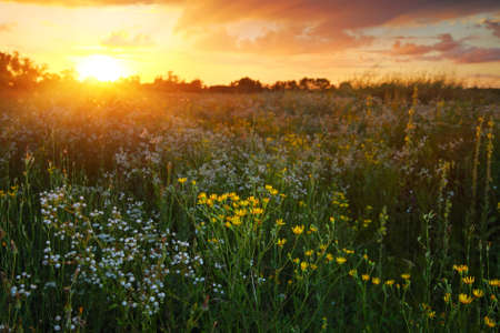 Beautiful wildflowers at sunset, landscape Banco de Imagens