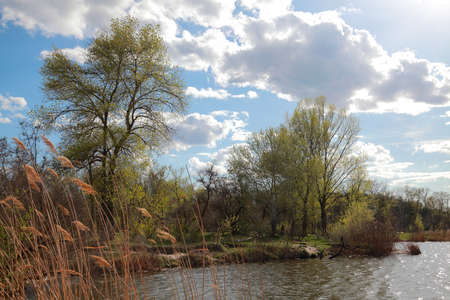 Natural landscape of river, forest, cloudy sky