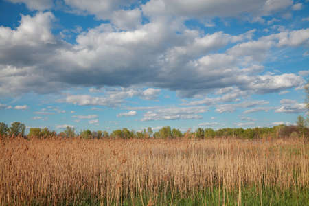 Spring natural landscape, dry reeds, trees against the sky